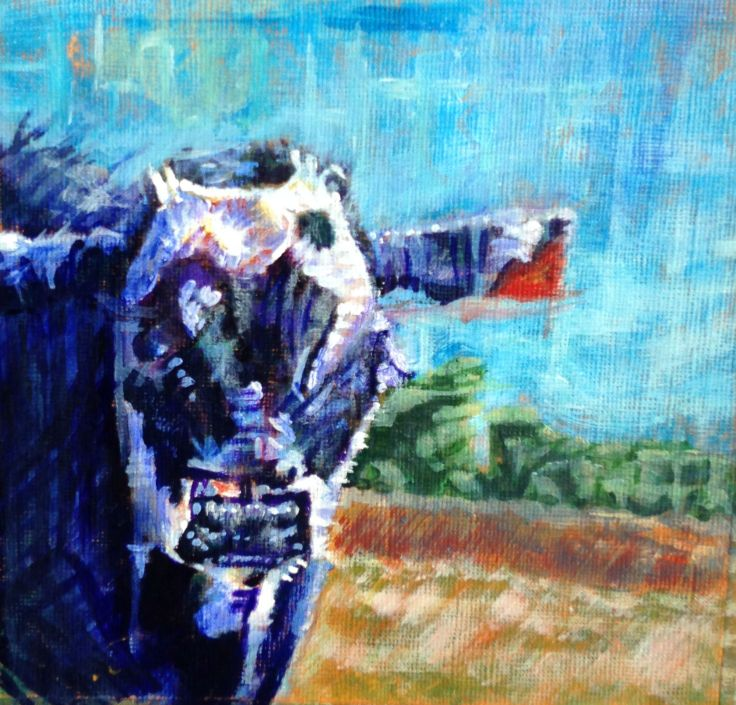 black cow (2)